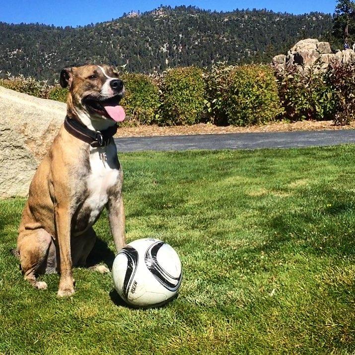 gorbie-soccer