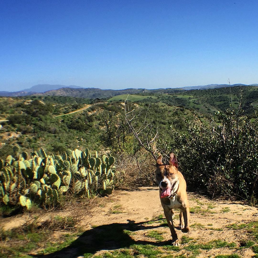 gorbie-trail